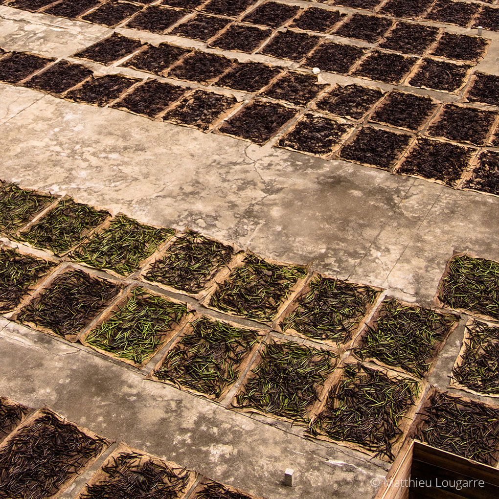 Agri-Madagascar-Vanilla-©-Matthieu-Lougarre-5-1020x1020px