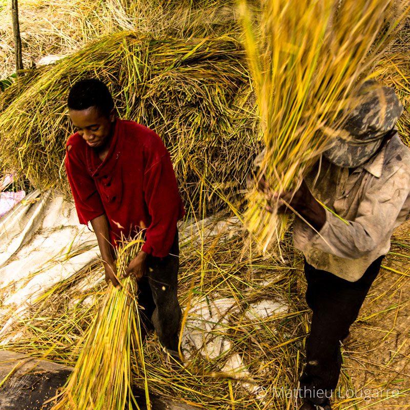Inside-Madagascar-©-matthieu-lougarre-4-800x800px